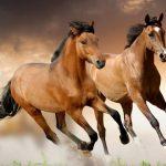 Avance científico mundial: investigadores argentinos lograron generar clones equinos con genomas mejorados