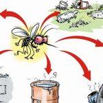 Temporada de dengue: las precauciones que hay que conocer y tener en cuenta